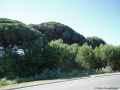 Mein Pinienwald