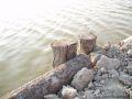 An einem Teich bei Saintes Maries